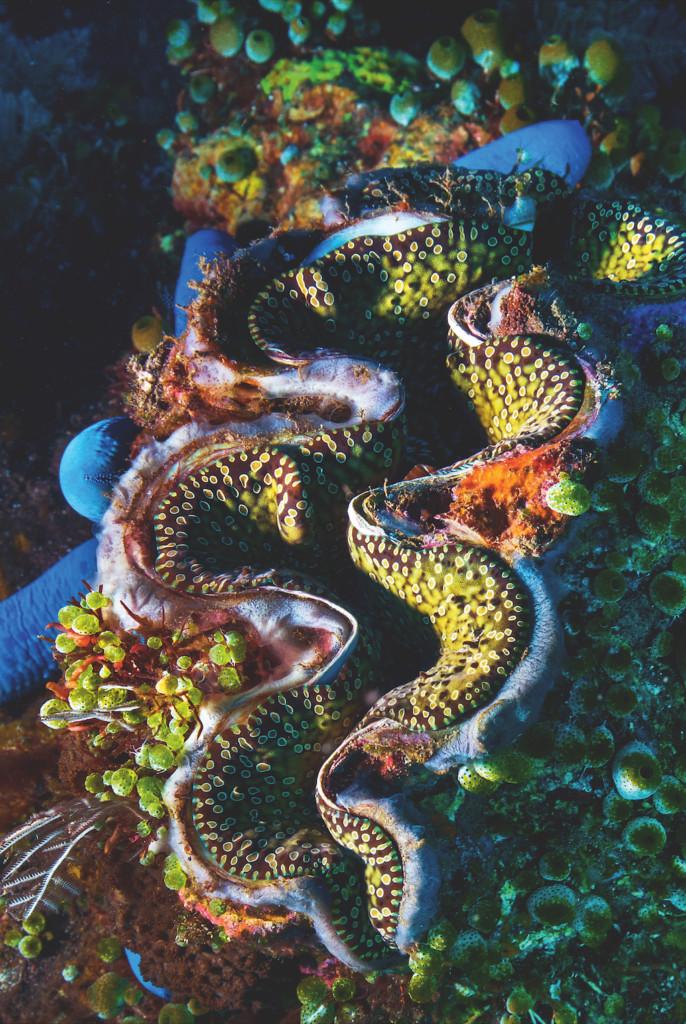 Korallengriff fotografieren: Unterwasserfotografie
