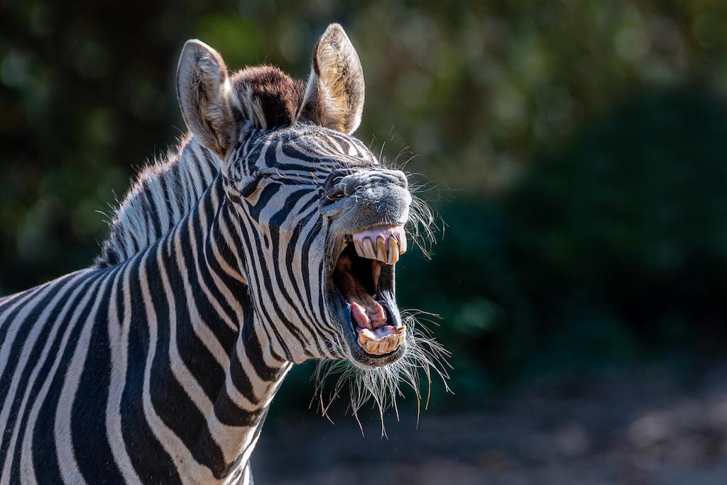 Im Duisburger Zoo Tiere fotografieren