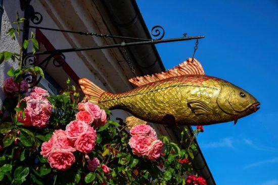 der goldene Fisch in Schleswig