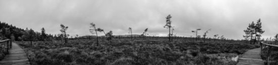 SchwarzWeisses Moor... von Michael Zechmeister