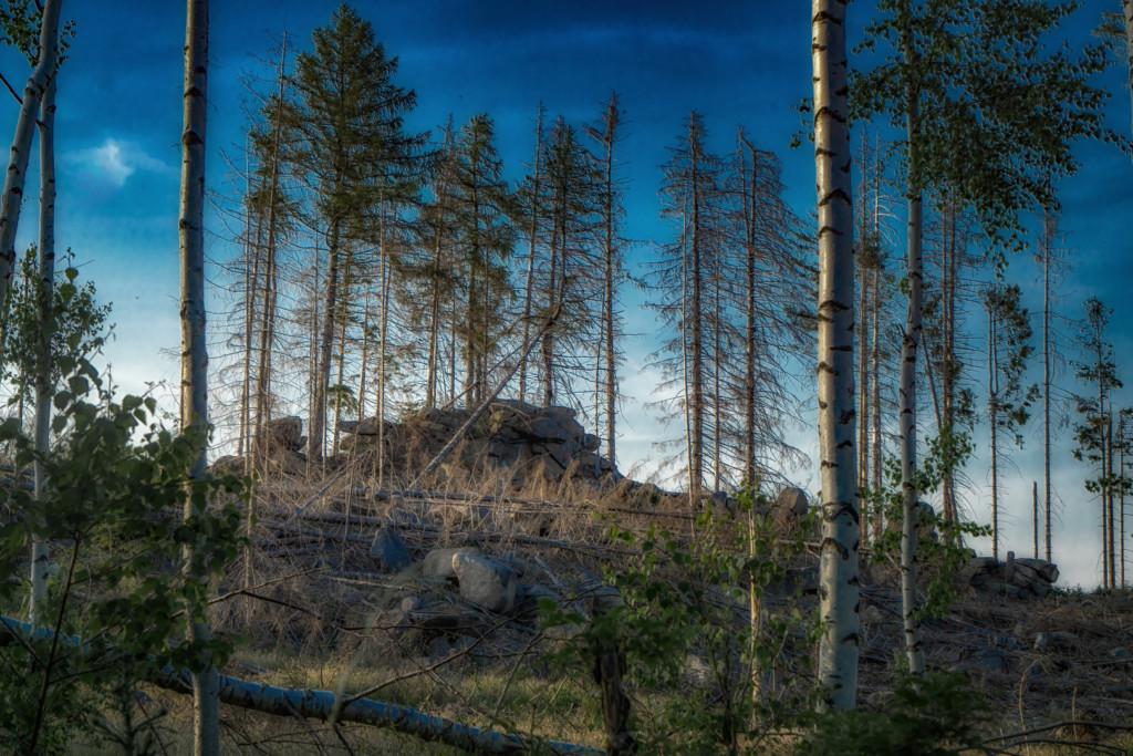 Den Harz fotografieren
