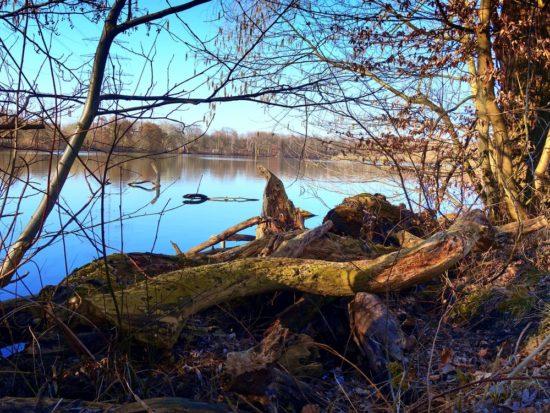 Der Ewaldsee in Gelsenkirchen.